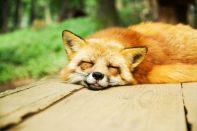 Brain Function Sleep
