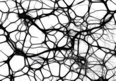 Neurons Healthy Brain Function